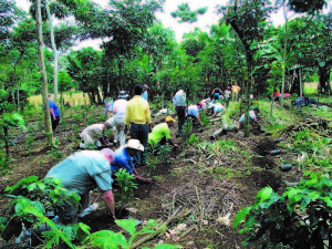 A group from First Presbyterian helps to replant a coffee field in Guatemala, using plants purchased with Run For Coffee donations.